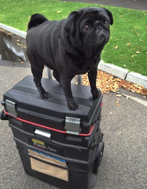Pug on Hangin' with Phil toolbox